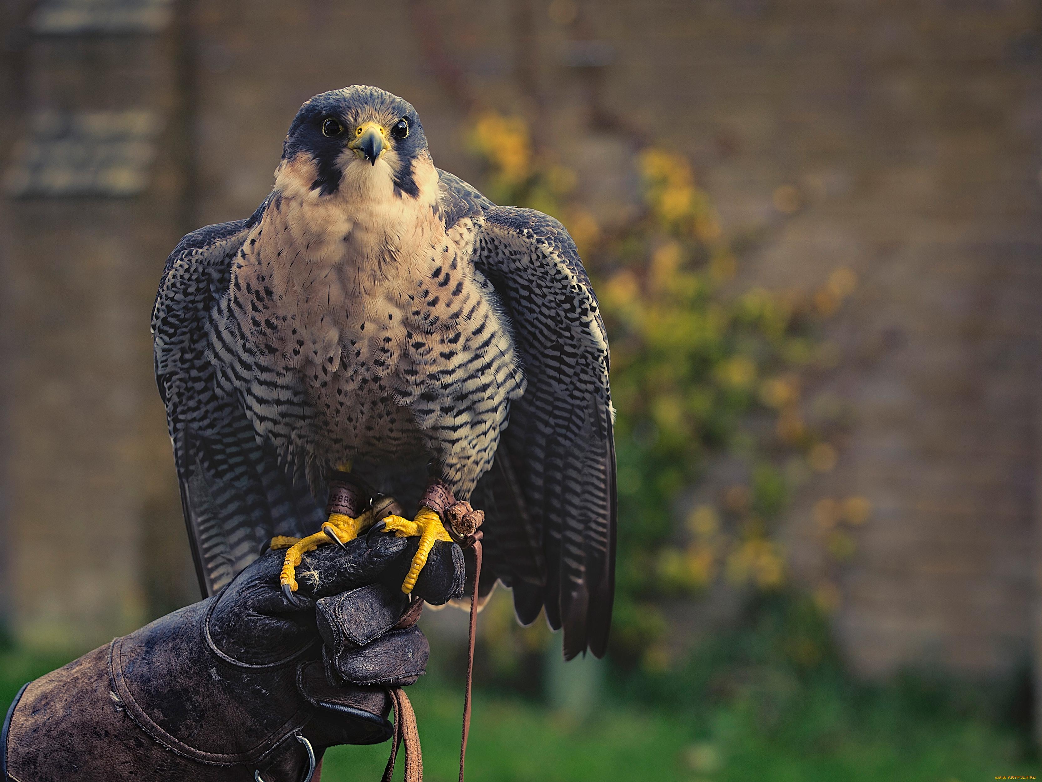 Как скопировать фотографии хищных птиц